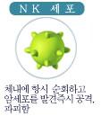 NK 세포